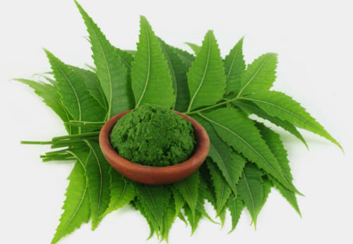 4 Health Cautions You Should Know before You Use Neem